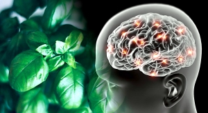 Basilic Alzheimer